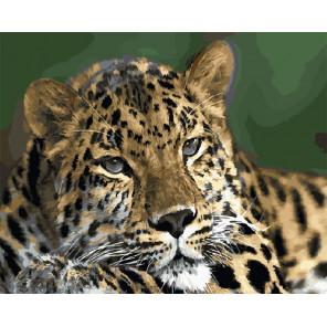 Взгляд хищника Раскраска картина по номерам на холсте ZX 20594