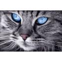 Голубые глаза Алмазная мозаика вышивка Гранни AG2517