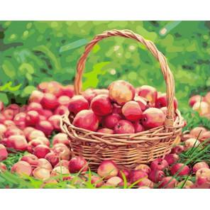 Корзинка с яблоками Раскраска картина по номерам на холсте GX38034