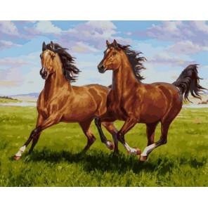 Тандем 40х50 см Раскраска картина по номерам на холсте PK90026