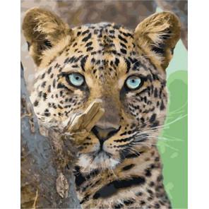 Леопард на охоте Раскраска картина по номерам на холсте GX38277