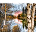 Осенние березы Раскраска картина по номерам на холсте GX23198