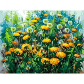 Начало лета Раскраска картина по номерам на холсте 381-AS