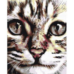 Портрет кота Раскраска картина по номерам на холсте A67