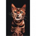 Злой рычащий кот Раскраска картина по номерам на холсте