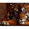 Красавец тигр Раскраска картина по номерам на холсте GX27291