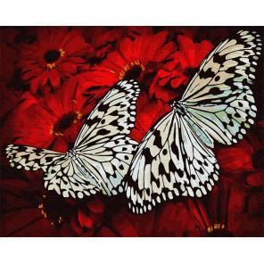 Белые бабочки Раскраска картина по номерам на холсте GX29432