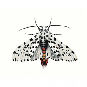 Бабочка леопард Раскраска картина по номерам на холсте