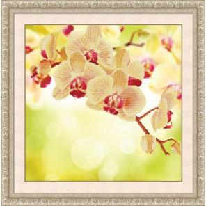 Нежная орхидея Алмазная частичная вышивка (мозаика) Color Kit