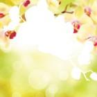 Область для выкладки Нежная орхидея Алмазная частичная вышивка (мозаика) Color Kit