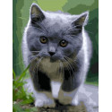 Котенок на прогулке Раскраска картина по номерам на холсте GX38917