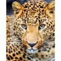 Леопард Алмазная вышивка (мозаика) Гранни