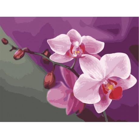 Розовые орхидеи Раскраска (картина) по номерам на холсте ...