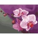 Розовые орхидеи Раскраска (картина) по номерам акриловыми красками на холсте Menglei