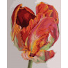 Тюльпан Картина по номерам на холсте Color Kit CG2004