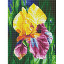 Ирис Алмазная вышивка мозаика Color kit DKD1003