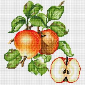 Яблочки Алмазная вышивка мозаика на подрамнике Белоснежка 581-ST-S