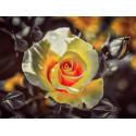 Чайная роза Алмазная частичная вышивка (мозаика) Molly KM0930