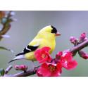 Весенняя птичка Алмазная частичная вышивка (мозаика) Molly KM0938