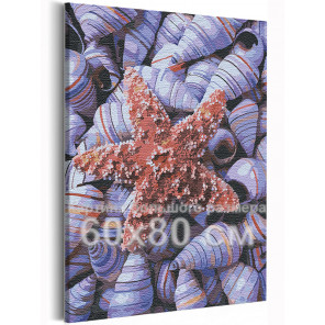 Ракушки / Море / Морская тема 60х80 см Раскраска картина по номерам на холсте AAAA-RS231-60x80