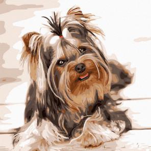 Йоркширский терьер Картина по номерам Molly KH1080