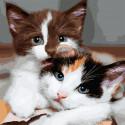 Пушистые котята Картина по номерам Molly KH1087