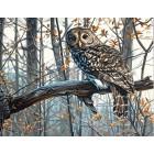 Мудрая сова Алмазная вышивка (мозаика) Molly