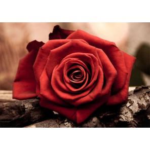 Красная роза Алмазная вышивка (мозаика) Гранни