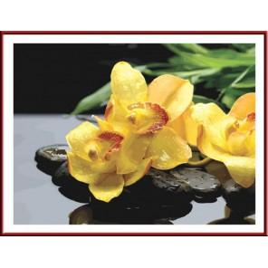Жёлтые орхидеи Раскраска по номерам акриловыми красками на холсте Color Kit