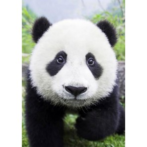 Любопытная панда Алмазная вышивка (мозаика) Гранни