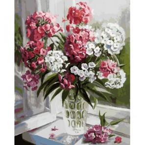 Флоксы Раскраска ( картина ) по номерам акриловыми красками на холсте Белоснежка