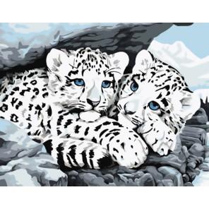 Снежные леопарды Раскраска ( картина ) по номерам акриловыми красками на холсте Белоснежка