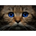 Синеглазый кот Алмазная вышивка (мозаика) Гранни