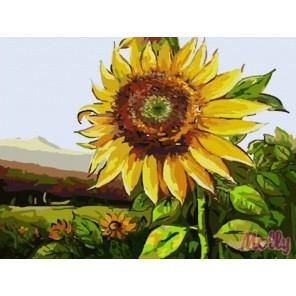 Цветение подсолнуха Раскраска (картина) по номерам акриловыми красками на холсте Molly