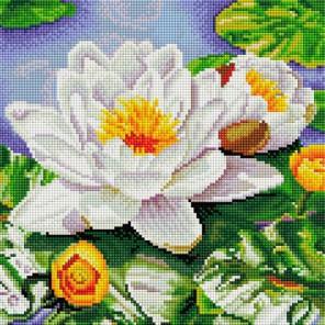 Нимфея озерная Алмазная вышивка (мозаика) Белоснежка