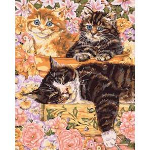 Тихий сад (художник Энн Мортимер) Раскраска картина по номерам Plaid