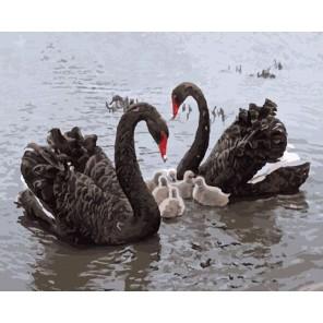 Черные лебеди Раскраска картина по номерам на холсте Molly