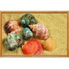 Цветные ракушки Алмазная частичная вышивка (мозаика) Color Kit