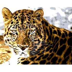 Взгляд Раскраска картина по номерам акриловыми красками на холсте Menglei