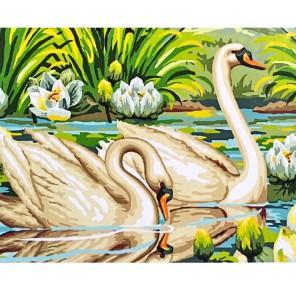 Пара лебедей Раскраска картина по номерам на холсте Molly