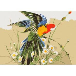 Попугай в полевых цветах Раскраска картина по номерам акриловыми красками на холсте Menglei