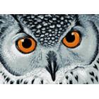 Взгляд совы Алмазная мозаика вышивка Гранни   Алмазная вышивка купить