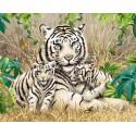Белые тигры Раскраска картина по номерам акриловыми красками на холсте | Картина по цифрам купить