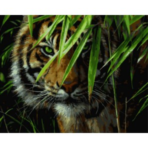Тигр в джунглях Раскраска картина по номерам акриловыми красками на холсте | Картина по цифрам купить
