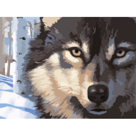 Волчий взгляд Раскраска картина по номерам акриловыми красками на холсте | Купить доставкой или самовывозом в интернет магазине
