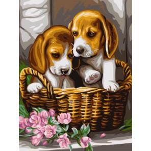 Щенки в корзине Раскраска картина по номерам акриловыми красками на холсте