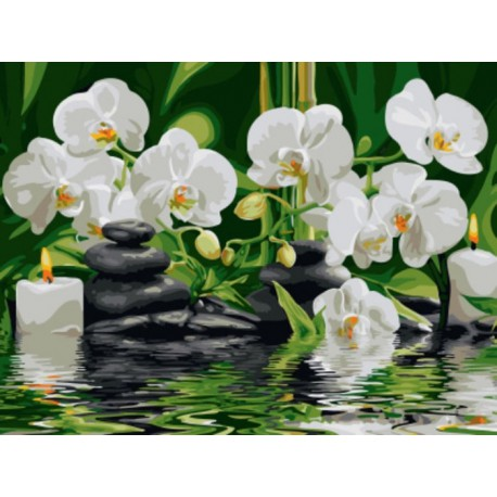 Орхидеи Раскраска картина по номерам акриловыми красками ...