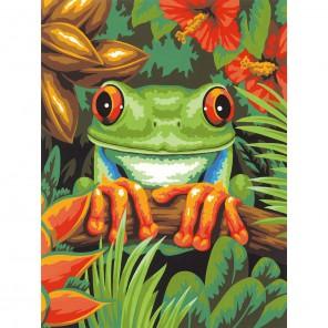 Древесная лягушка Раскраска картина по номерам Dimensions