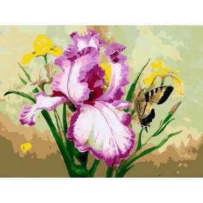 Ирис и бабочка Раскраска по номерам на холсте Menglei