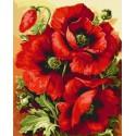 Три мака Раскраска картина по номерам акриловыми красками на холсте